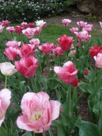 parc floral10-8