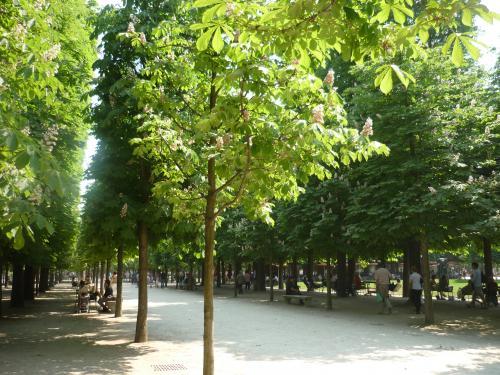 parc tuilerie11-1