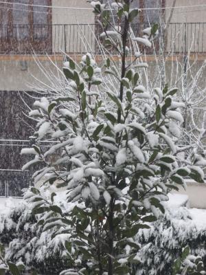 neige10-1.jpg