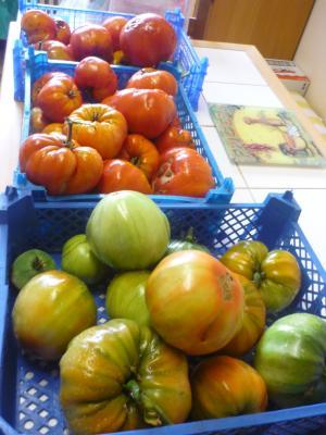 tomate10-2.jpg