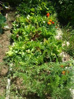 7-25 carrot-beet