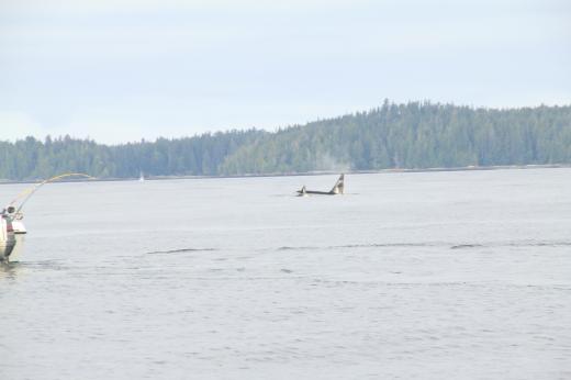 2011 orca
