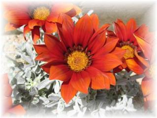 2010年5月13日オレンジの花