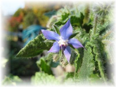 2010年11月21日青い花