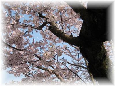 2011年4月9日須磨浦山上遊園②