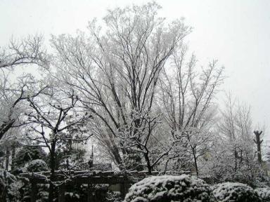 我家のリビングからの雪景色