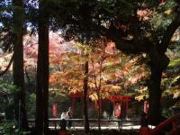 s-2010油山寺4紅葉 028
