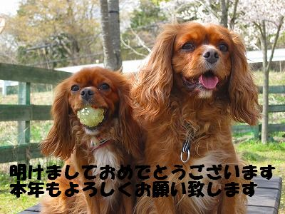 IMG_4675-1.jpg