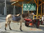 七股塩山の乗馬