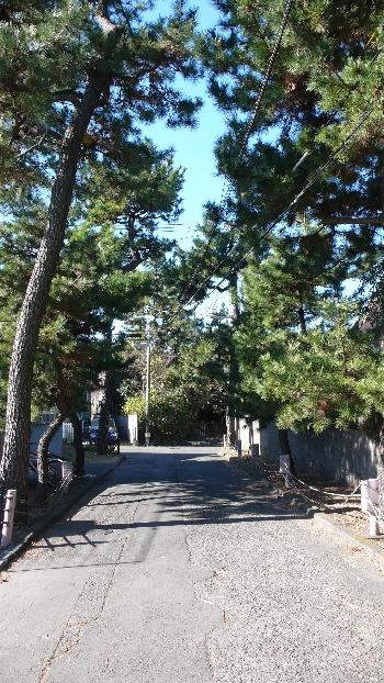近所の風景。ご覧の通り松の木が海辺の街の雰囲気を出していますね。