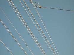 電線も真っ白