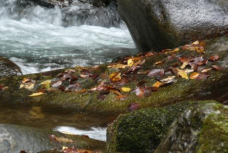 渓流の岩にも落ち葉が・・・