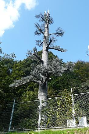 何故か?松ノ木を模したアンテナ