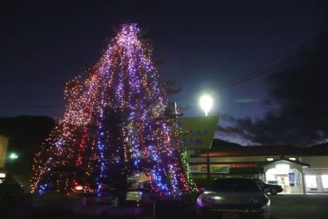 大子駅前のもみの木のイルミネーション