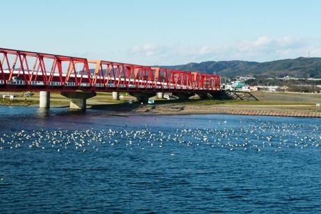 久慈大橋にカモメ