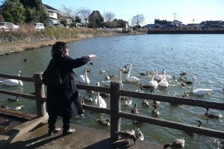 餌に群がる水鳥たち