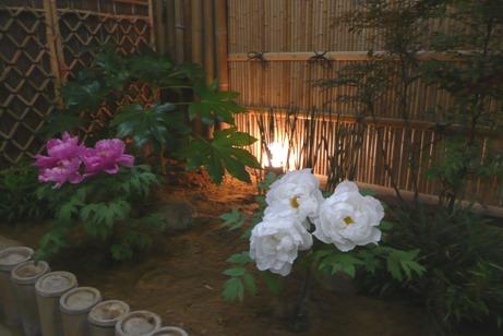 屋内の「牡丹の園」に咲いた牡丹