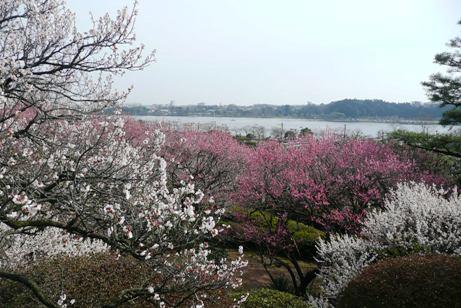 千波湖の眺望