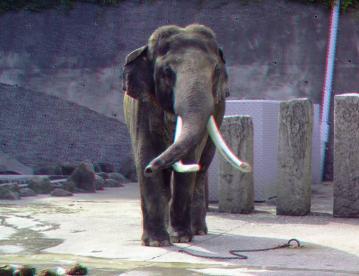インド象 ボン