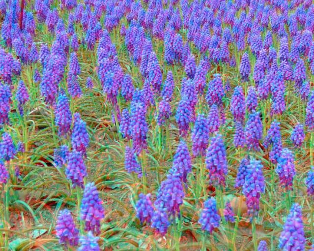 アナグリフ 紫色