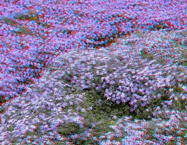 アナグリフ 細かな花々