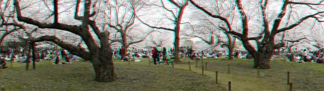 アナグリフ 桜見物