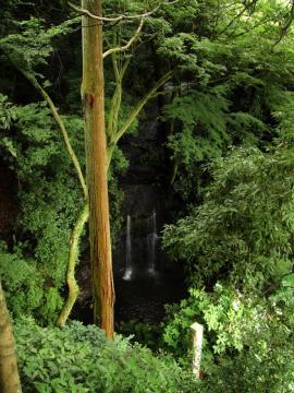 見下ろした鎌倉の滝