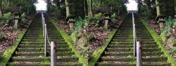 苔が凄い階段