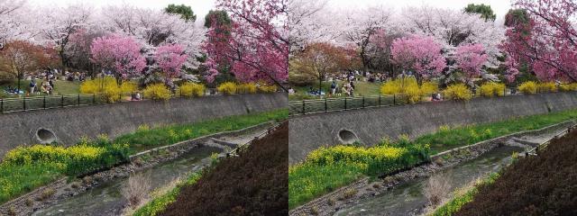 桜見えてきたぞ!