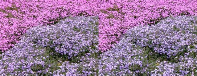 細かな花々