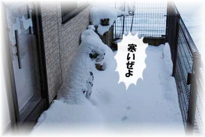 明日は雪、降ろしてあげるからね