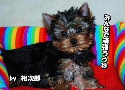yujiro01.jpg