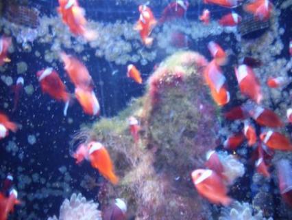 美ら海水族館05