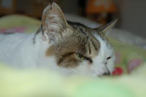 momo_0305.jpg