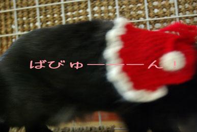 08.12.2くるみ