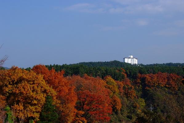 展望台からの紅葉