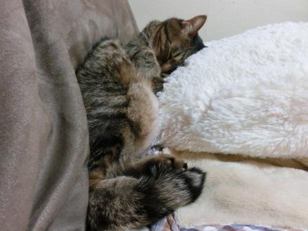 0162隣の猫は (6)