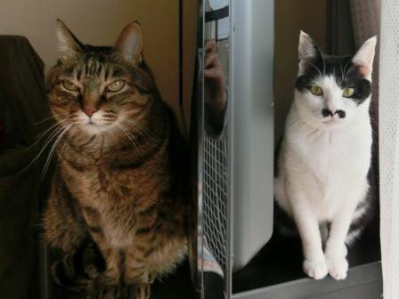 0162隣の猫は (3)