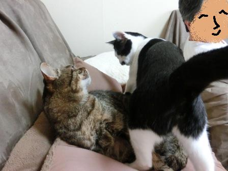 0162隣の猫は (4)