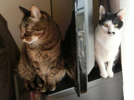 0162隣の猫は (2)