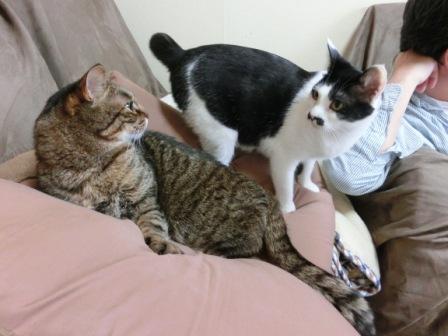 0162隣の猫は (5)