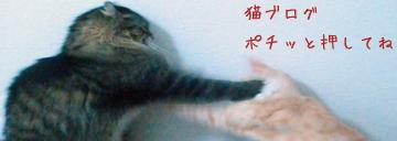 04bana_convert_20110413133326.jpg