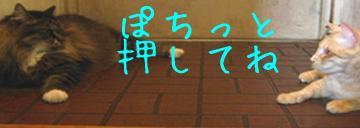 0704bana_convert_20110704122811.jpg