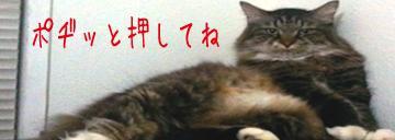 1104dai4bana_convert_20110425113938.jpg