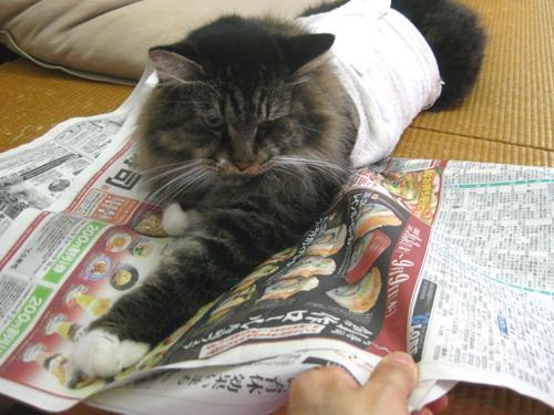 haramaki4_convert_20100908140000.jpg