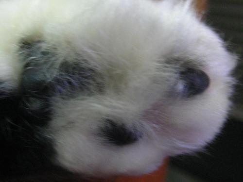 panda4_convert_20110413143435.jpg