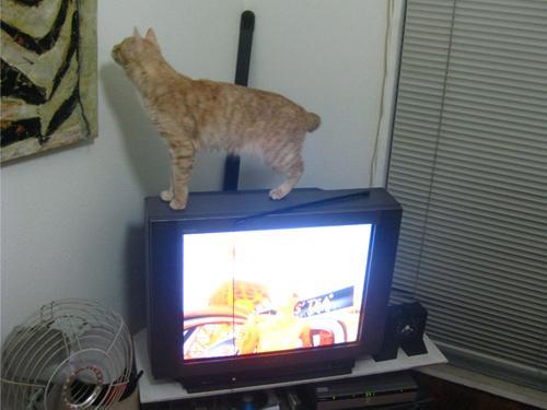 tv1_convert_20100531133948.jpg