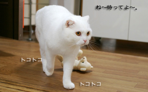 tokotokoコピー