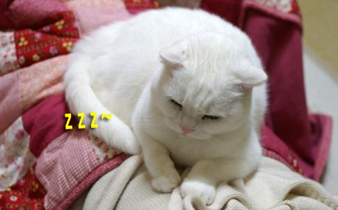 眠るマッサージ師のコピー