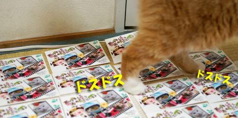 ぷぷのコピー